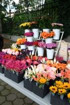 flowering_europe-0004